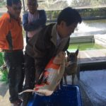 HS Mr. Shi ( 石造华先生), koi lover and hobbyist for 15 years. He is now the chairman of Taiwan Koi Development Association.