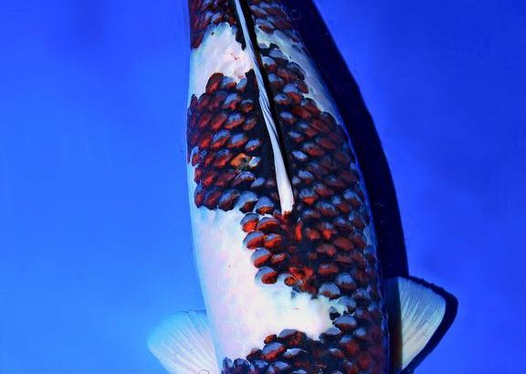 丸筑魚苑産