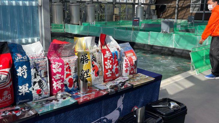 Sakai Fish Farm breed Sanke